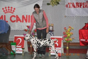 Image for post Kherson Dog Show