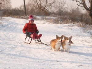 Image for post 'Corgi Raiders :)'